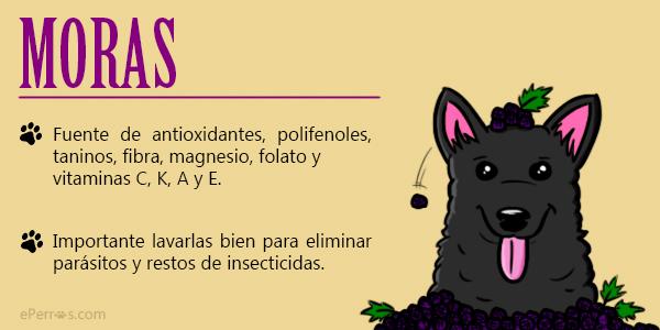 Los perros y las moras