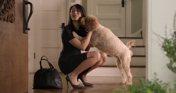 Vídeo de cómo los perros esperan a sus dueños