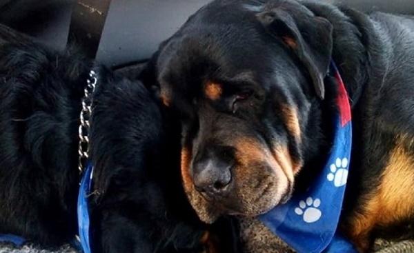 Perros lloran la muerte de sus familiares