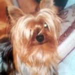 DEP Chuki, el perro de Loli