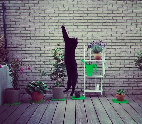Hancock-el-gato