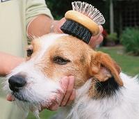 pauta de higiene canina cepillado