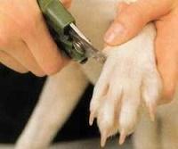 cortar uñas a los perros