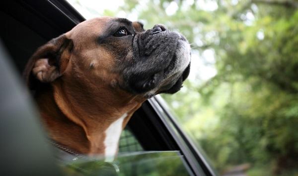 Golpes de calor en perros