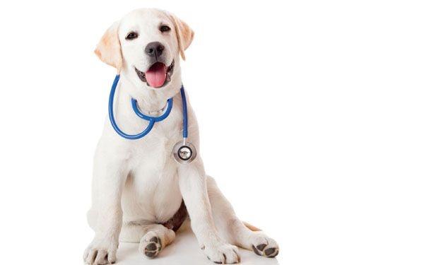 perro-cáncer