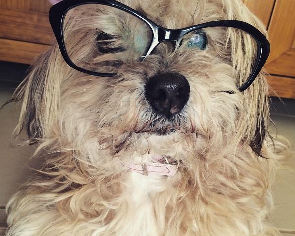 perro-gafas