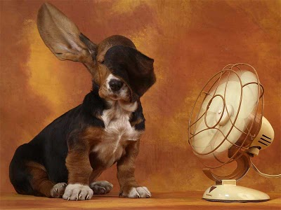 perro-ventilador