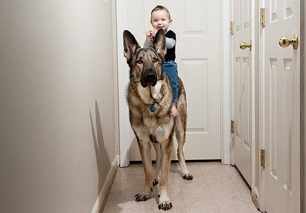 el perro y la llegada de un bebé