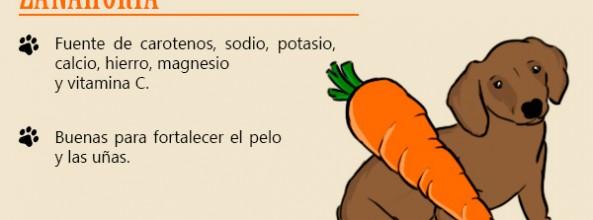Las verduras y hortalizas que puede comer tu perro