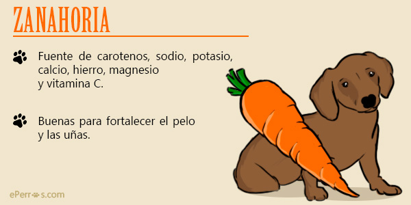 Verduras y hortalizas para tu perro, como las zanahorias