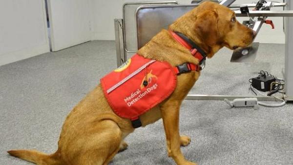 perros detectores de cáncer