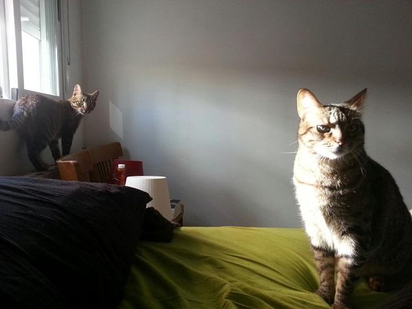 Lo gatos de Urien