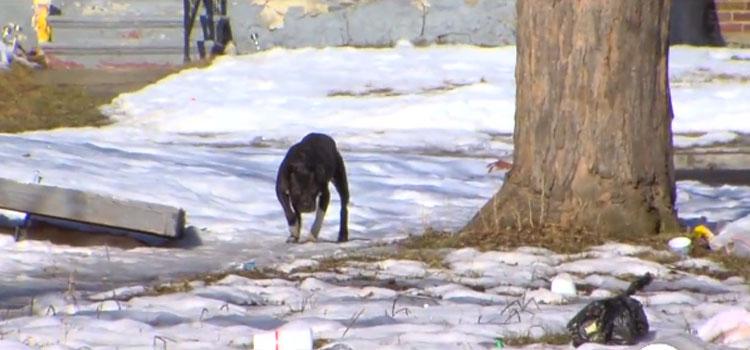 Lori-Briggs-rescata-perros-4