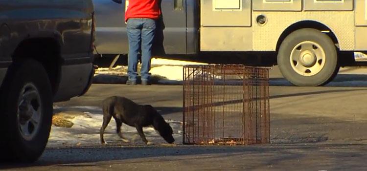 Lori-Briggs-rescata-perros-5