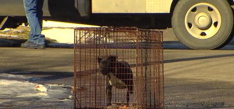 Lori-Briggs-rescata-perros-6