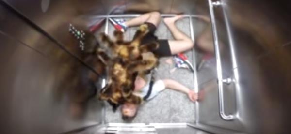 Broma perro disfrazado de araña