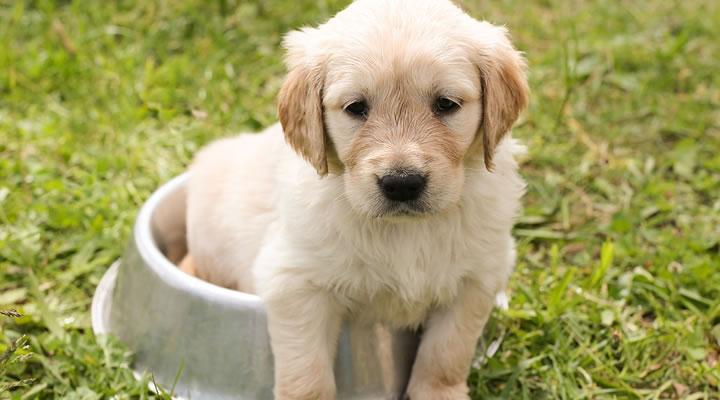 Curiosidades sobre perros que creemos verdaderas pero no lo son
