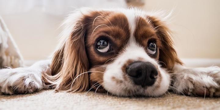 Desmintiendo mitos falsos sobre perros