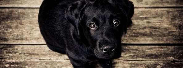 Desmintiendo mitos sobre perros