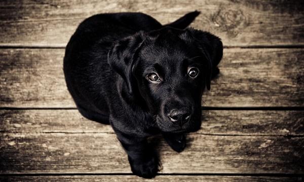 mitos y leyendas de los perros