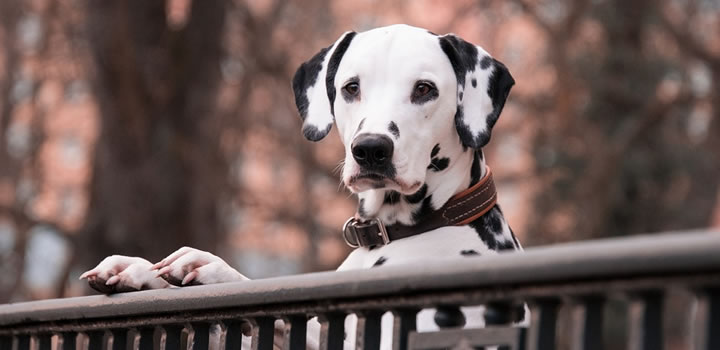 Creencias erróneas sobre perros