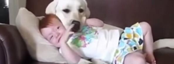 Vídeo de niños riéndose con sus perros