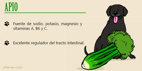 Apio, otra de las verduras que puedes incluir en la dieta de tu perro