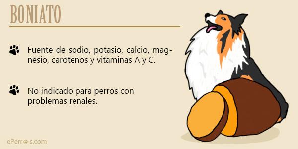 Alimentos recomendados para tu perro - El boniato