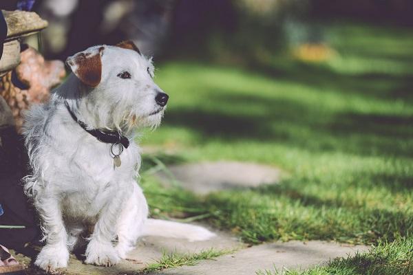 La esterilización y castración en perros