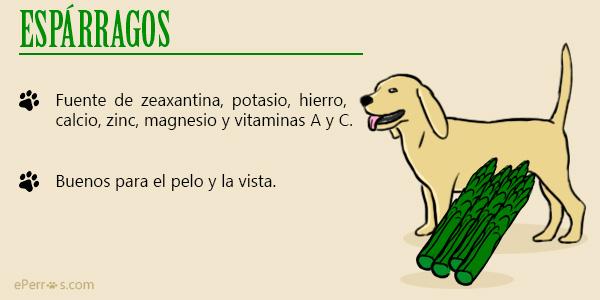 Espárragos - Verduras que puede comer un perro