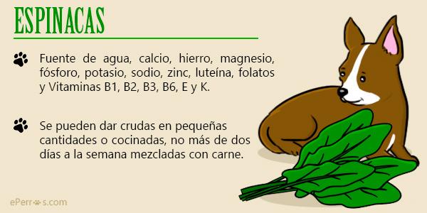 Introduce espinacas en la alimentación de tu perro