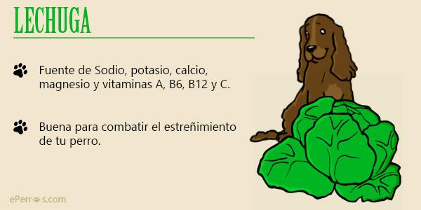 Lechuga, una verdura aliada para combatir el estreñimiento de tu perro