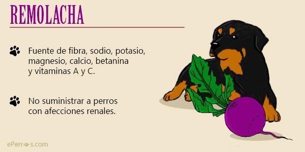 Hortalizas que puede comer un perro - La remolacha