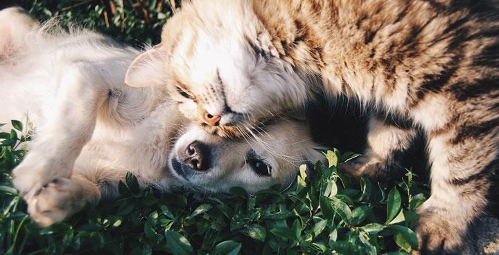 Mito falso de que los perros y los gatos son enemigos