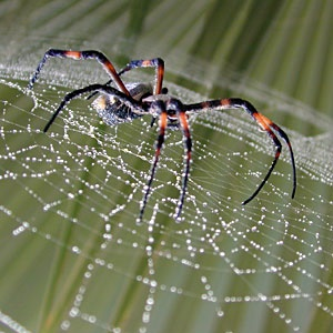 picaduras de arañas a perros