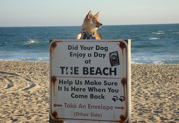 Playas para perros España 2015