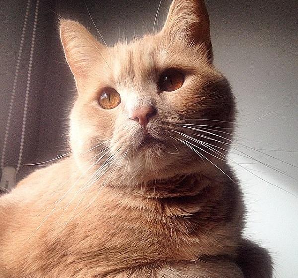 topo, el gato de lachilvy