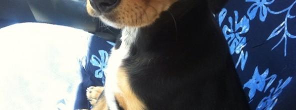 Aisha, la perra de Jessy