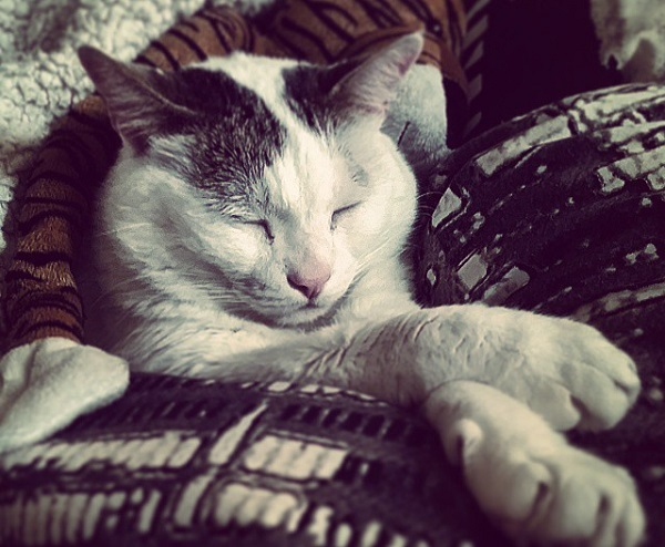 Cosme, el gato de Amaia