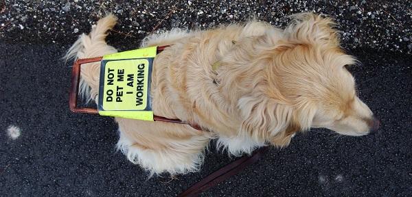 Los perros de terapia y asistencia