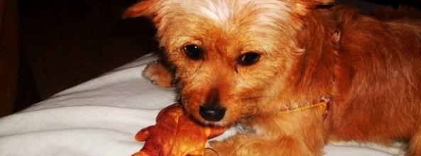 Luli, la perra de Sara