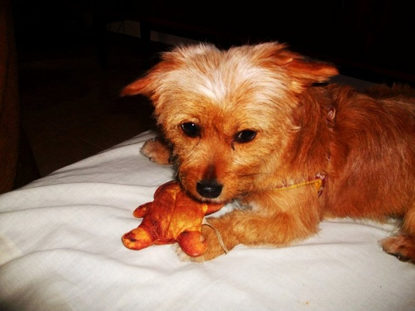 Luli-perra-Sara3-