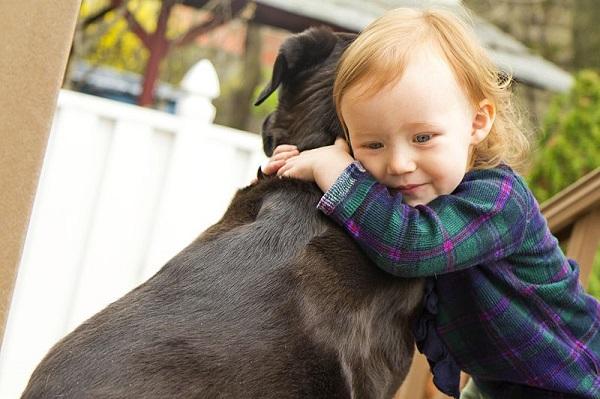 amor entre perros y sus dueños