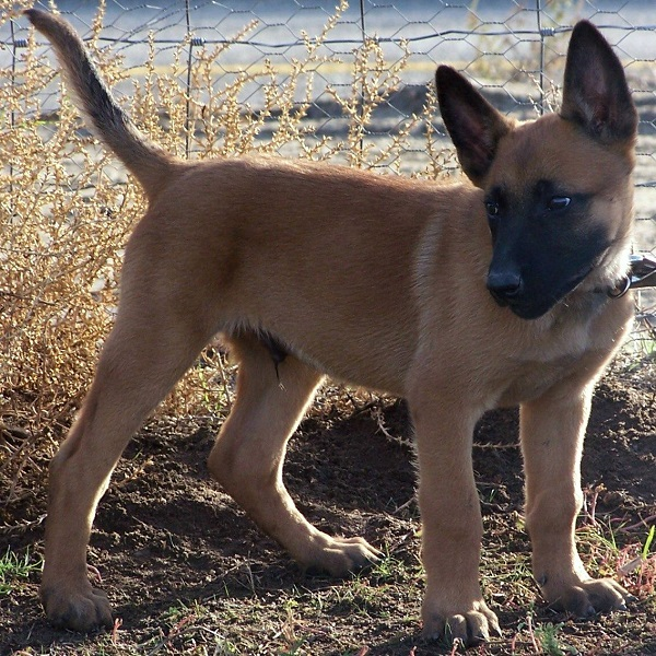 El cachorro durante el primer año de vida