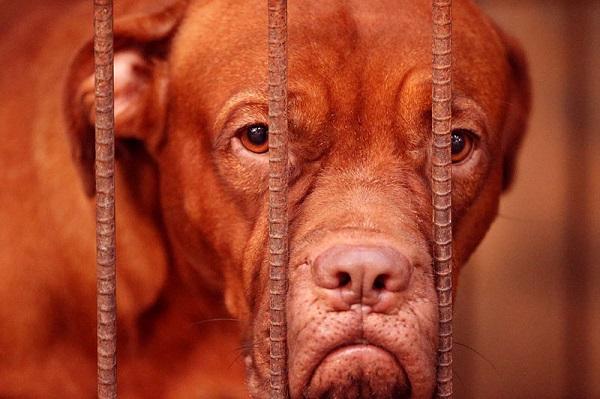 Todo sobre la adopción de perros