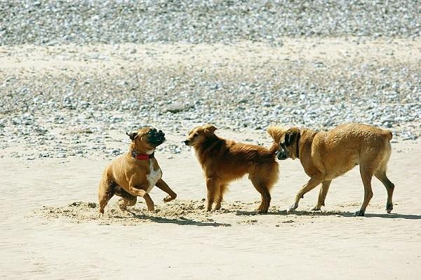 Cómo saber si un perro quiere jugar