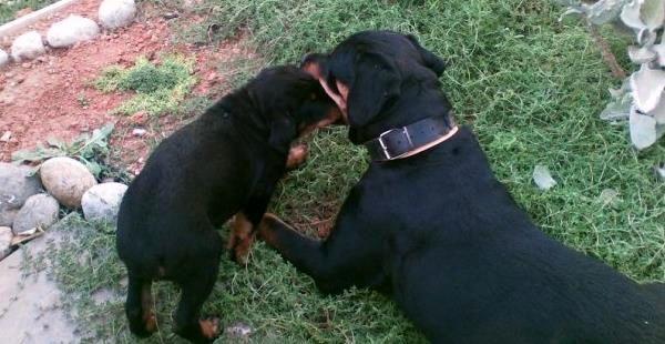 cachorros en su primer año de vida