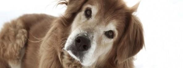El síndrome vestibular en perros