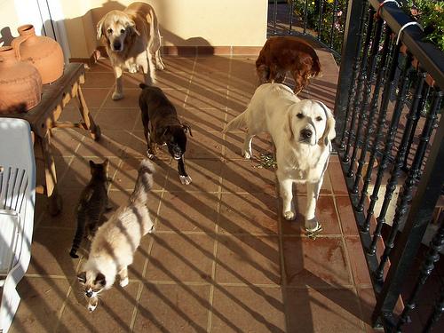 Noticias de perros