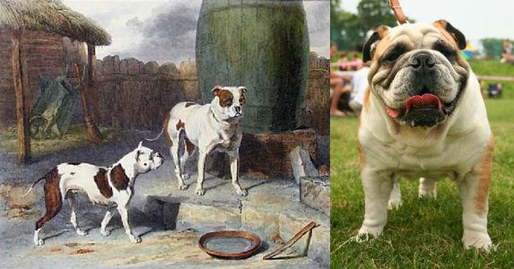 Bulldog Inglés antes y ahora